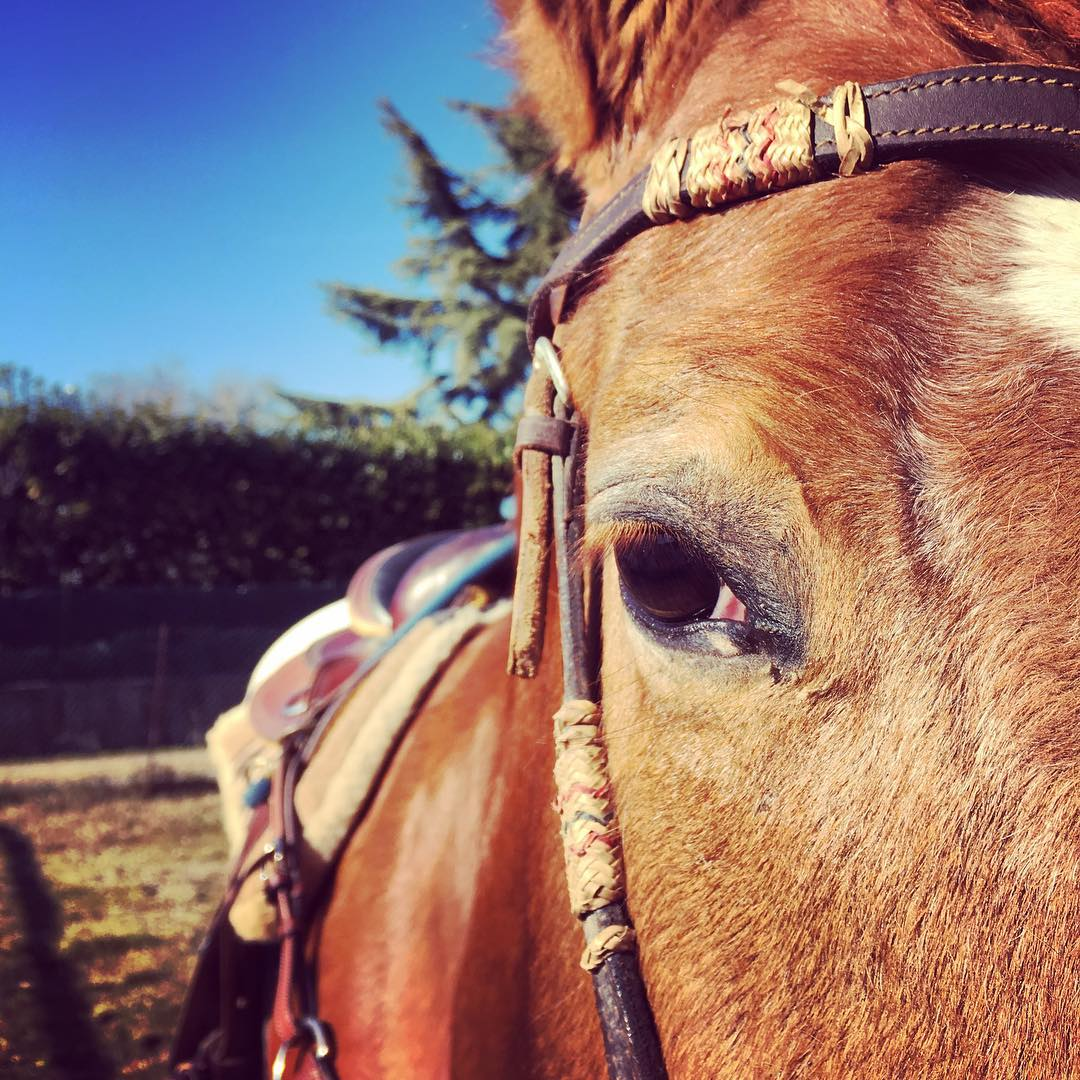 cavalli-pacchetti_hp