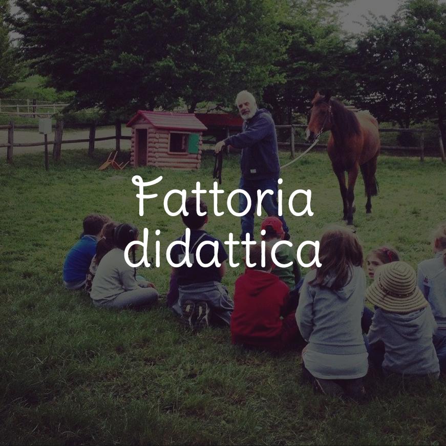 fatt-didatt-hp-hov